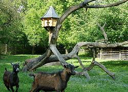 Streichelzoo - Waldsch�nke & Pension Am Forsthaus das Paradies f�r Urlauber, Ferieng�ste und Erholungssuchende im Niederlausitzer Land